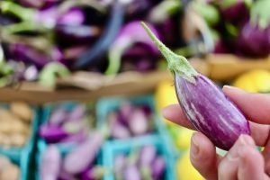 hand holding small fairy tale eggplant