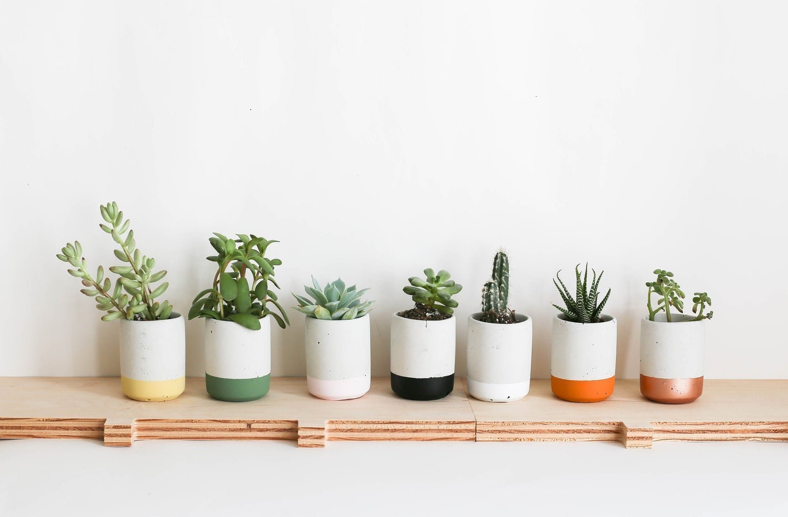 white concrete small planters with colored bases filled with succulents