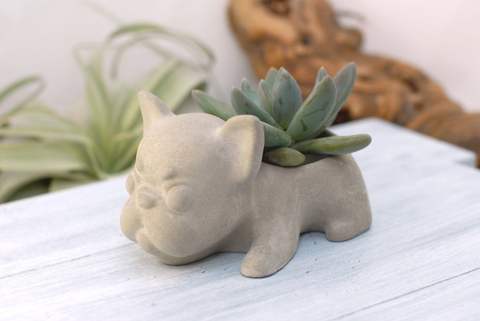 planter shaped like french bulldog with succulent in it