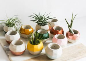geo shaped succulent planters with variety of colors