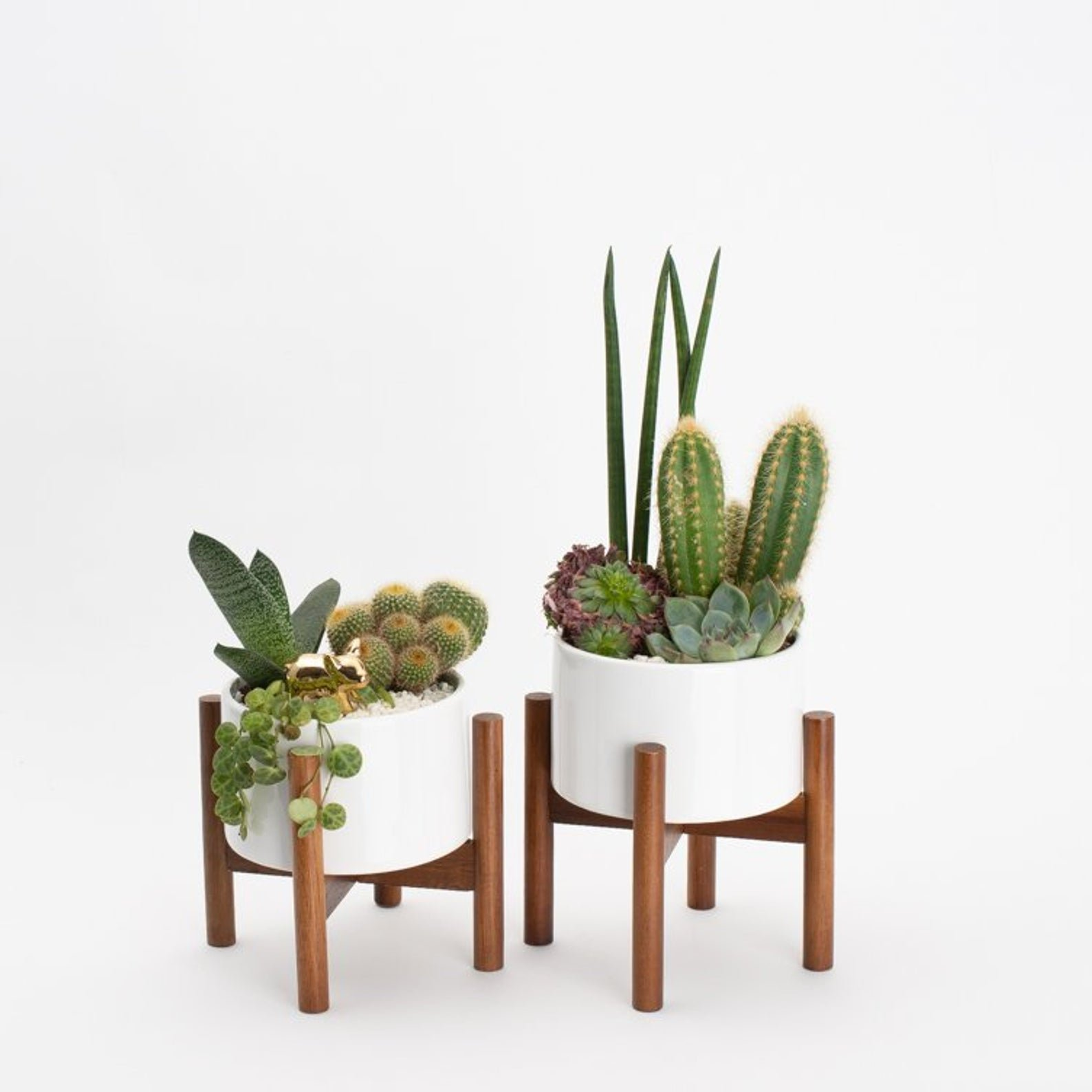 two mid century modern style succulent planters held by wooden stand filled with cacti and succulents