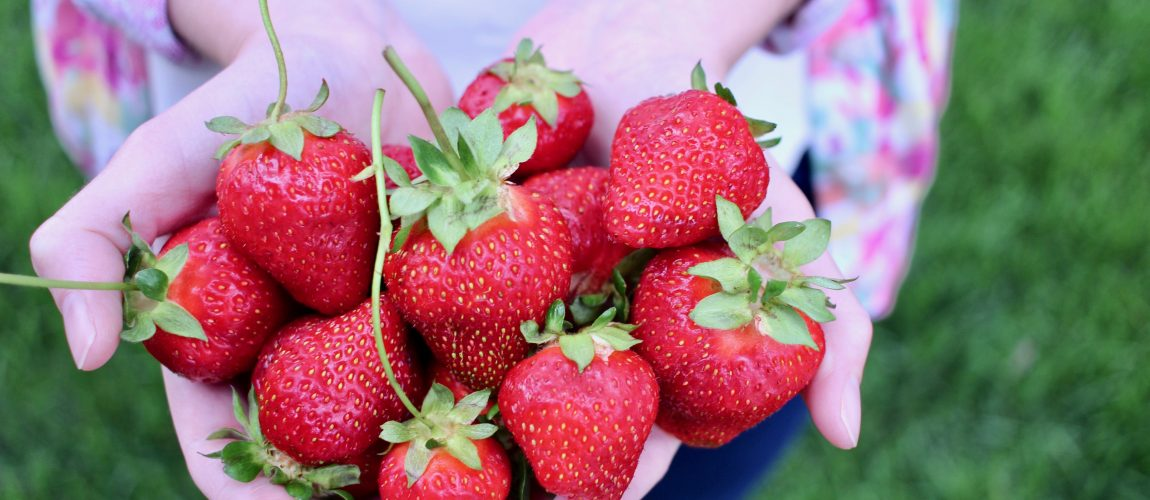 strawberries held in hands