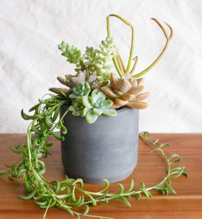 gray concrete planter filled with succulents